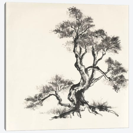 Sumi Tree I Canvas Print #WAC4653} by Chris Paschke Canvas Wall Art
