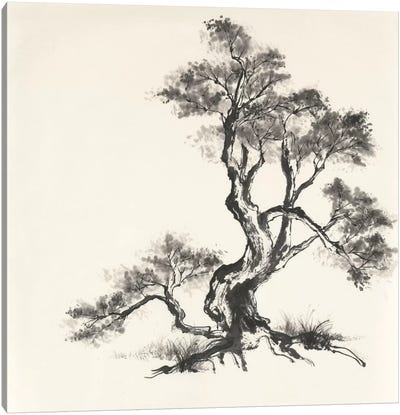 Sumi Tree I Canvas Art Print