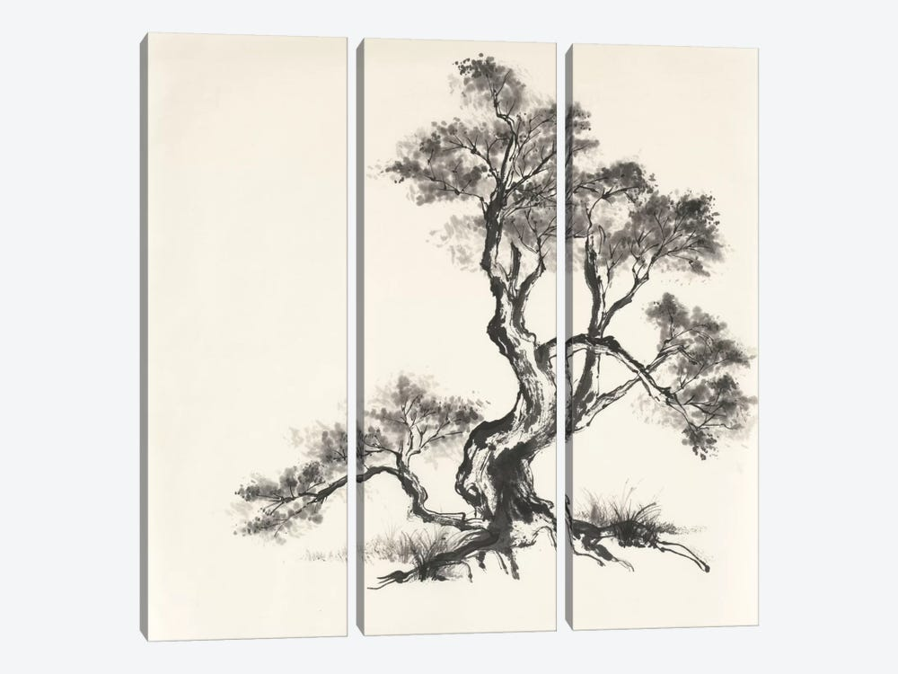 Sumi Tree I by Chris Paschke 3-piece Canvas Wall Art