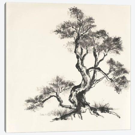 Sumi Tree I Canvas Print #WAC4653} by Chris Paschke Canvas Wall Art