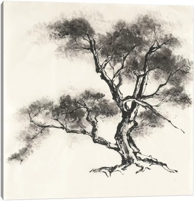 Sumi Tree II Canvas Art Print