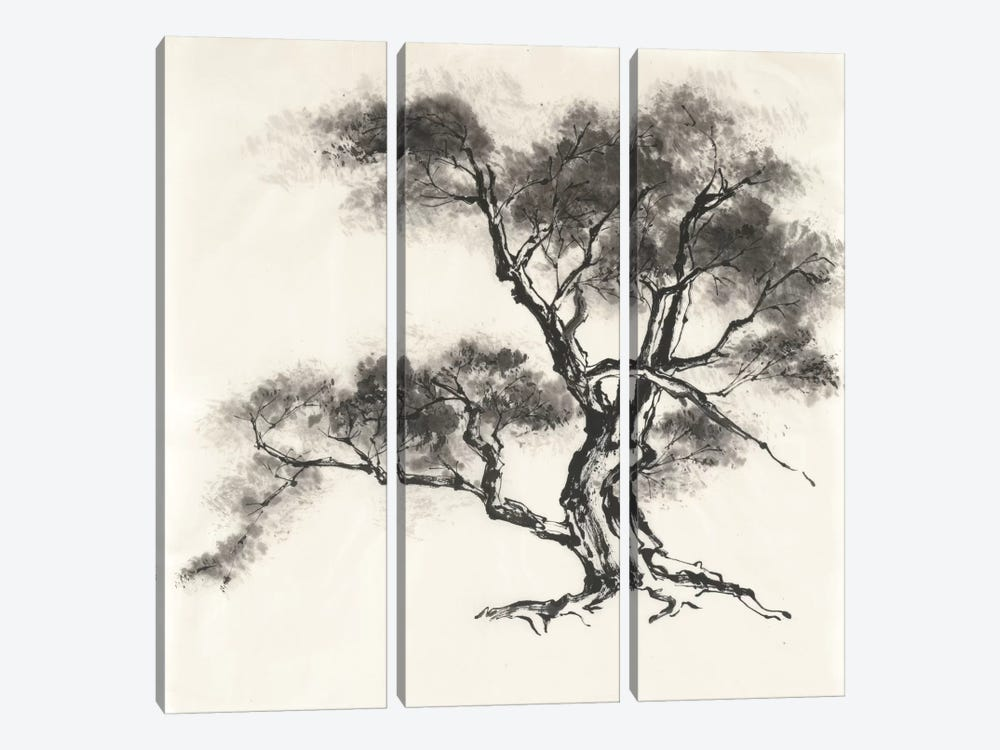 Sumi Tree II by Chris Paschke 3-piece Canvas Print