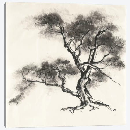 Sumi Tree II Canvas Print #WAC4654} by Chris Paschke Art Print