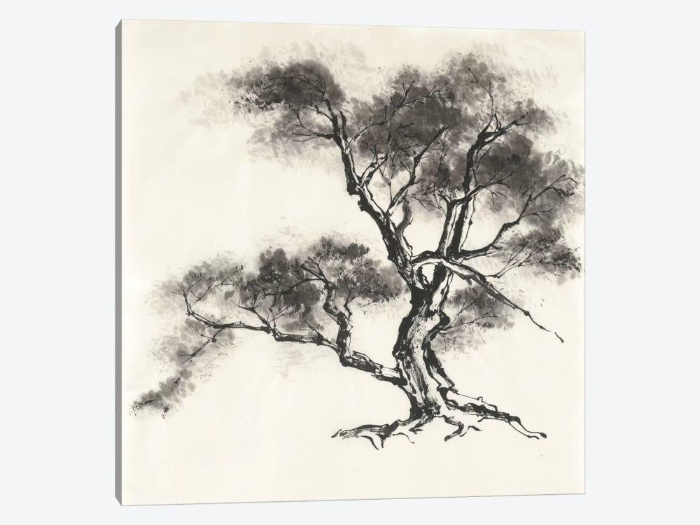 Sumi Tree II by Chris Paschke 1-piece Canvas Art Print