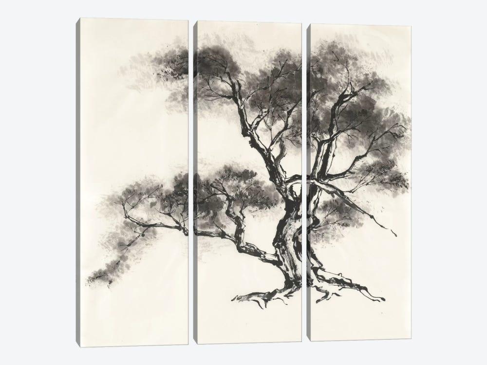 Sumi Tree II by Chris Paschke 3-piece Canvas Print