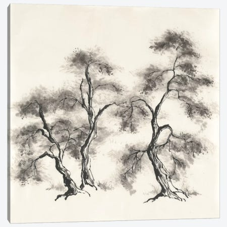 Sumi Tree III Canvas Print #WAC4655} by Chris Paschke Canvas Art Print