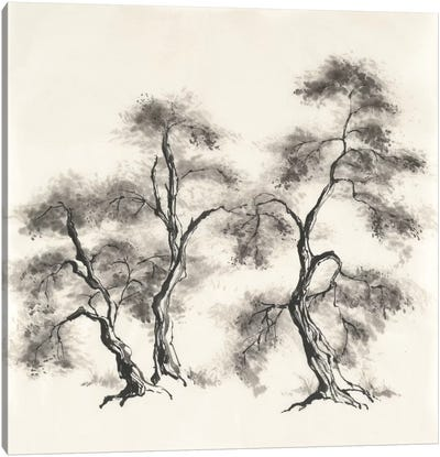 Sumi Tree III Canvas Art Print