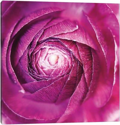 Ranunculus Abstract I Canvas Art Print