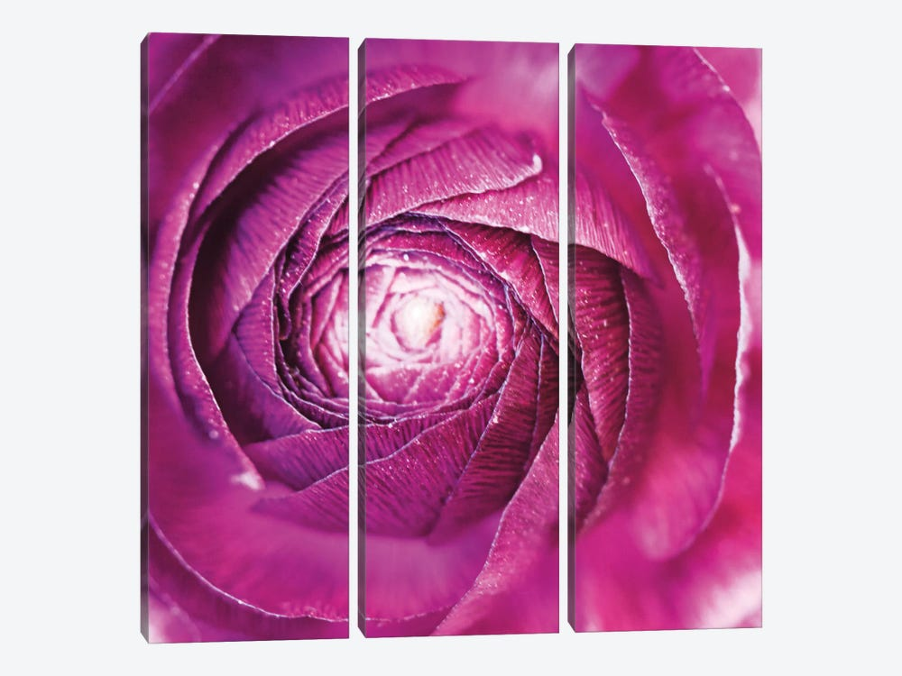 Ranunculus Abstract I by Laura Marshall 3-piece Art Print
