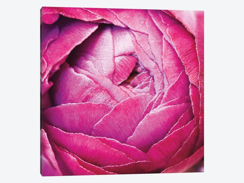 Ranunculus Abstract III by Laura Marshall 1-piece Art Print