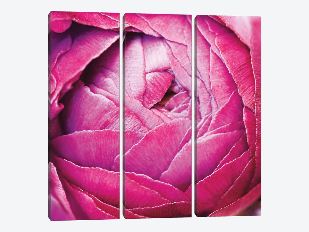 Ranunculus Abstract III by Laura Marshall 3-piece Canvas Print