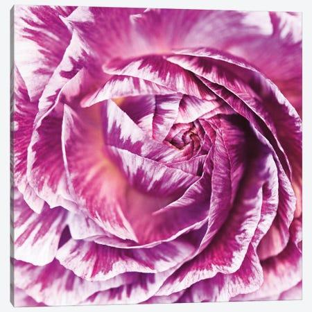 Ranunculus Abstract IV Canvas Print #WAC4695} by Laura Marshall Canvas Art Print