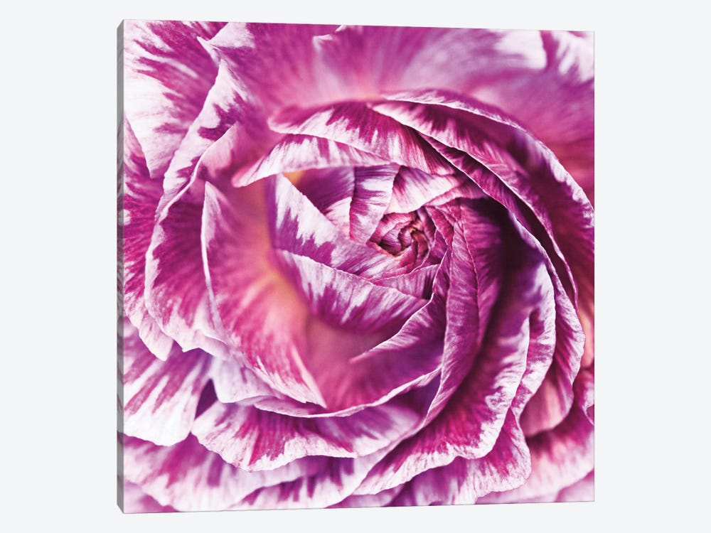 Ranunculus Abstract IV by Laura Marshall 1-piece Canvas Art