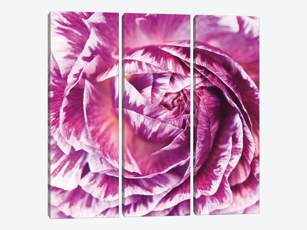 Ranunculus Abstract IV by Laura Marshall 3-piece Canvas Art