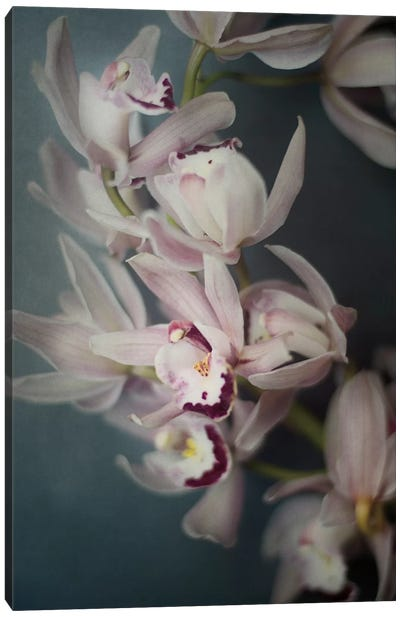 Dark Orchid I Canvas Art Print