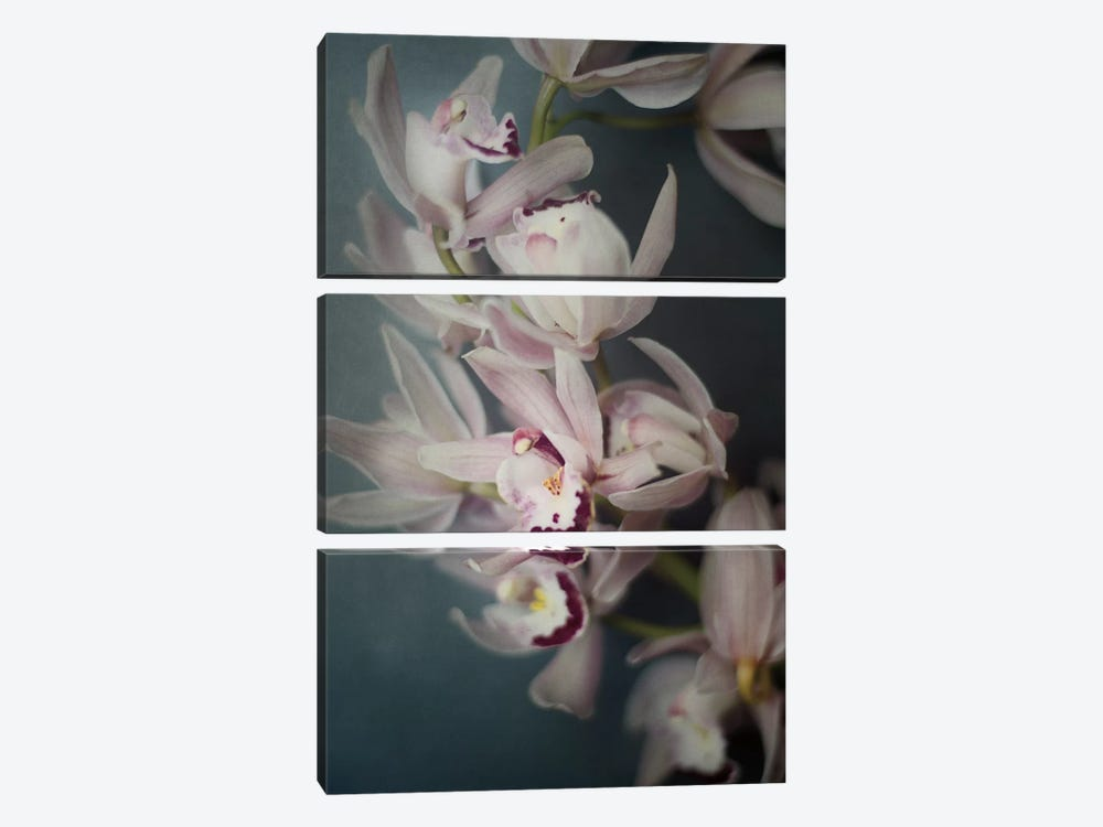 Dark Orchid I by Elizabeth Urquhart 3-piece Canvas Wall Art