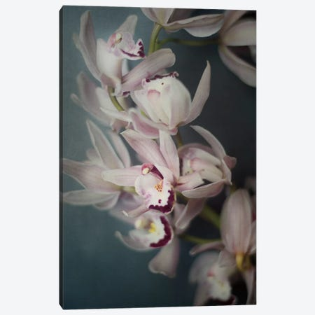 Dark Orchid I Canvas Print #WAC4714} by Elizabeth Urquhart Canvas Art