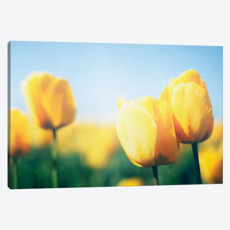 Sunny Blooms II Canvas Print #WAC4720} by Elizabeth Urquhart Canvas Wall Art