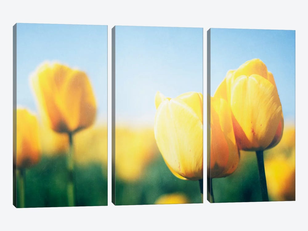 Sunny Blooms II 3-piece Canvas Art Print