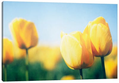 Sunny Blooms II Canvas Art Print