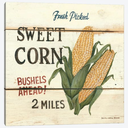 Fresh Picked Sweet Corn Canvas Print #WAC475} by David Carter Brown Canvas Artwork