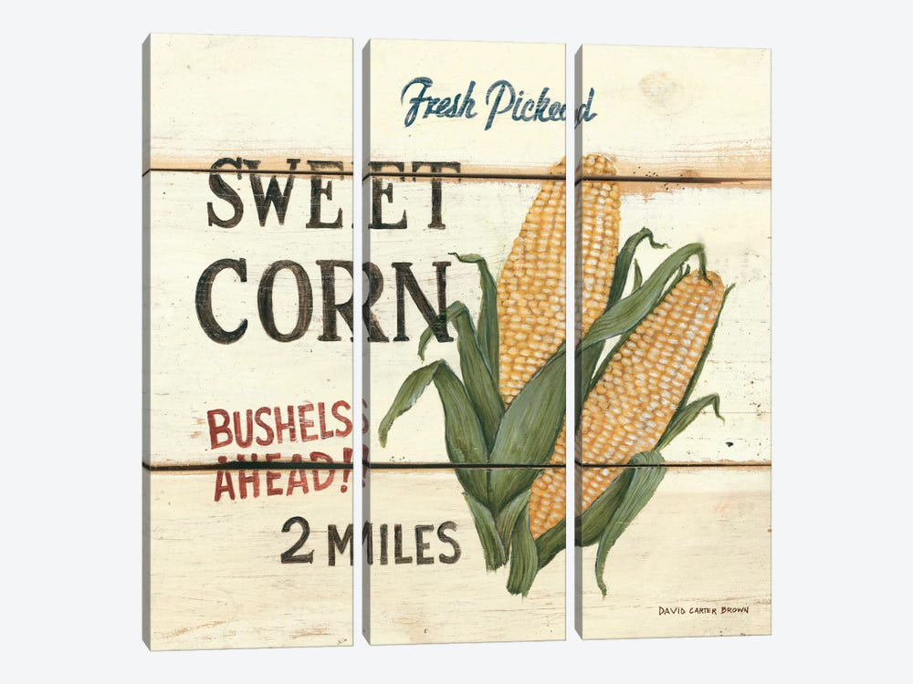 Fresh Picked Sweet Corn by David Carter Brown 3-piece Art Print