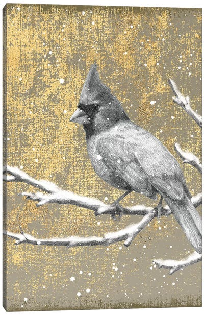 Winter Birds Series: Cardinal II Canvas Art Print