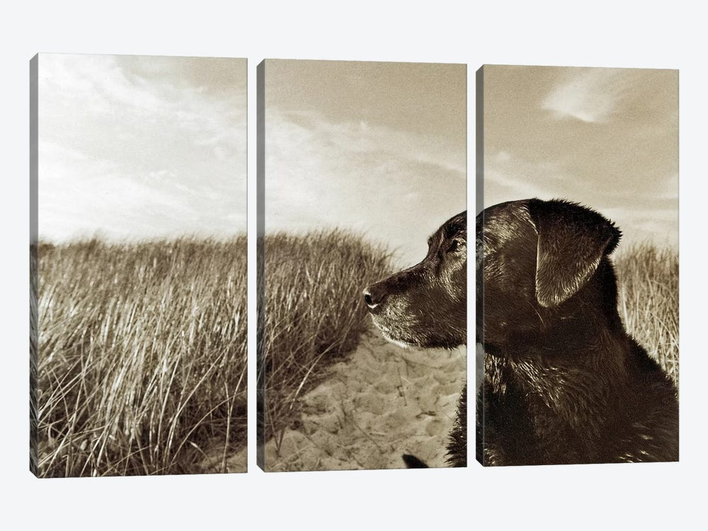 At The Beach by Jim Dratfield 3-piece Canvas Print