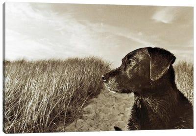 At The Beach Canvas Art Print