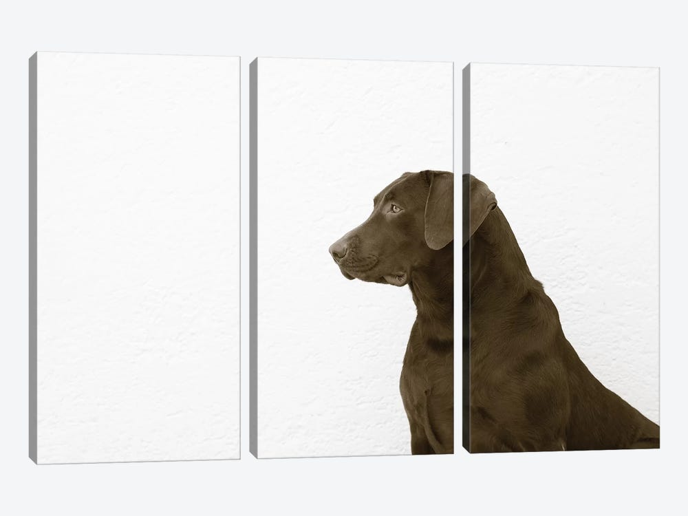 I See You by Jim Dratfield 3-piece Canvas Art