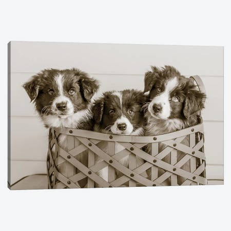 What A Cute Bundle Canvas Print #WAC4837} by Jim Dratfield Canvas Print