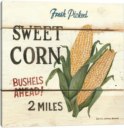 Fresh Picked Sweet Corn Canvas Art Print