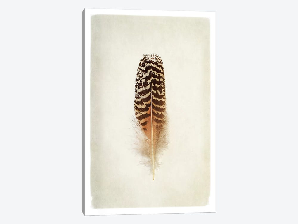 Feather I in Color by Debra Van Swearingen 1-piece Canvas Print