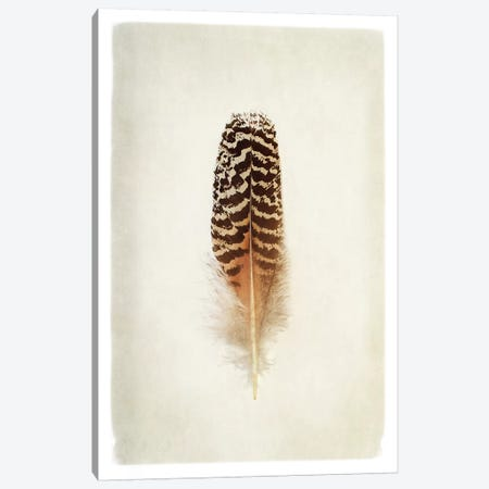 Feather I in Color Canvas Print #WAC4891} by Debra Van Swearingen Canvas Artwork