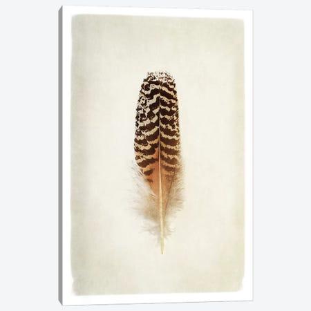 Feather I in Color Canvas Print #WAC4891} by Debra Van Swearingen Canvas Artwork