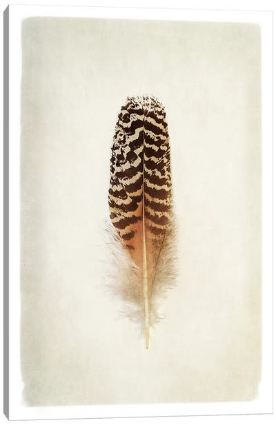 Feather I in Color Canvas Art Print