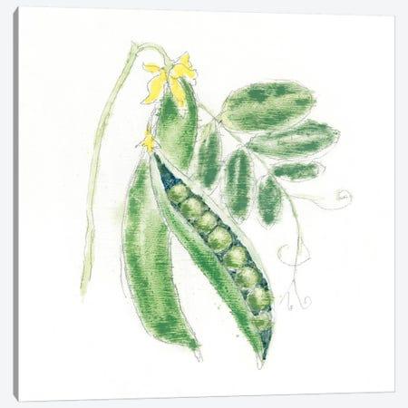 Garden Delight XI Canvas Print #WAC4924} by Emily Adams Art Print