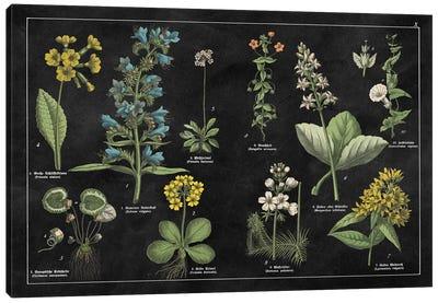 Botanical Floral Chart I Canvas Print #WAC4930