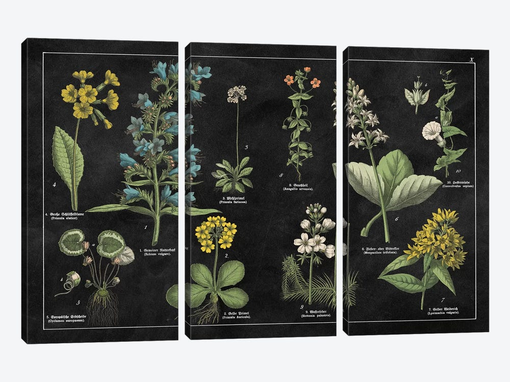 Botanical Floral Chart I by Wild Apple Portfolio 3-piece Canvas Print