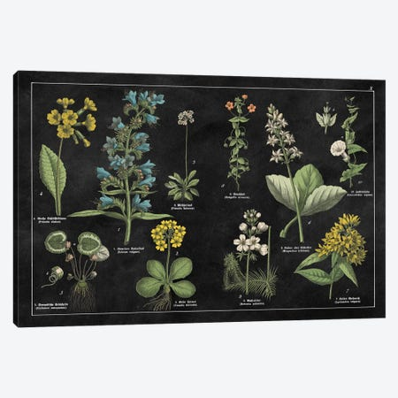 Botanical Floral Chart I Canvas Print #WAC4930} by Wild Apple Portfolio Canvas Art Print