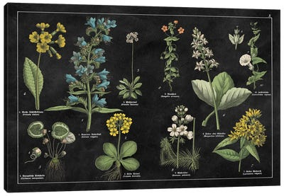 Botanical Floral Chart I Canvas Art Print