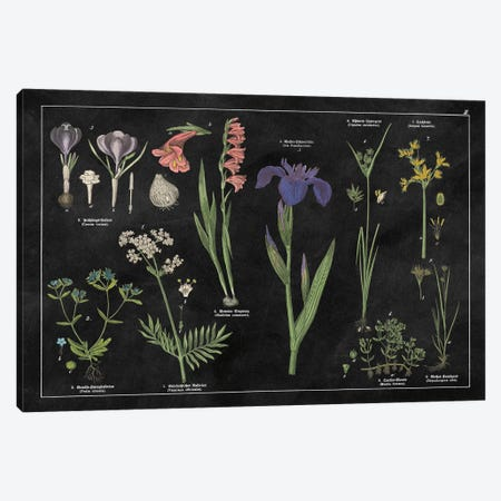 Botanical Floral Chart II Canvas Print #WAC4931} by Wild Apple Portfolio Art Print
