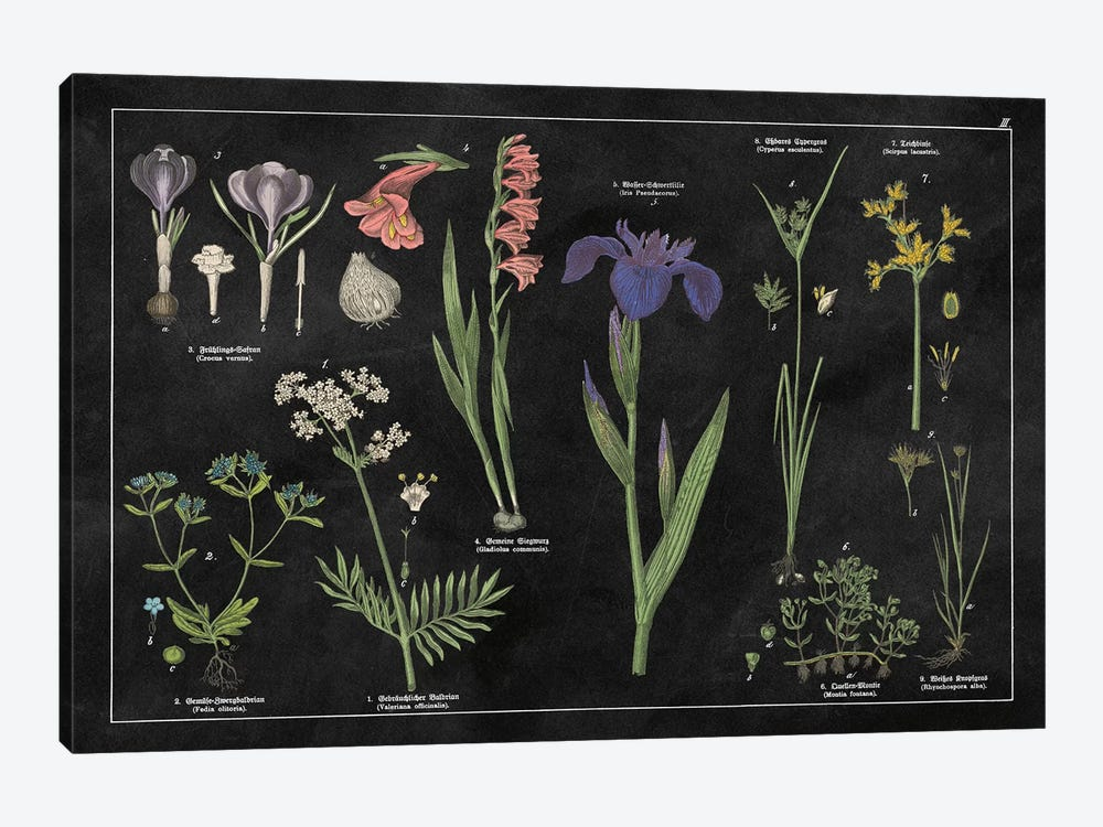 Botanical Floral Chart II 1-piece Canvas Wall Art