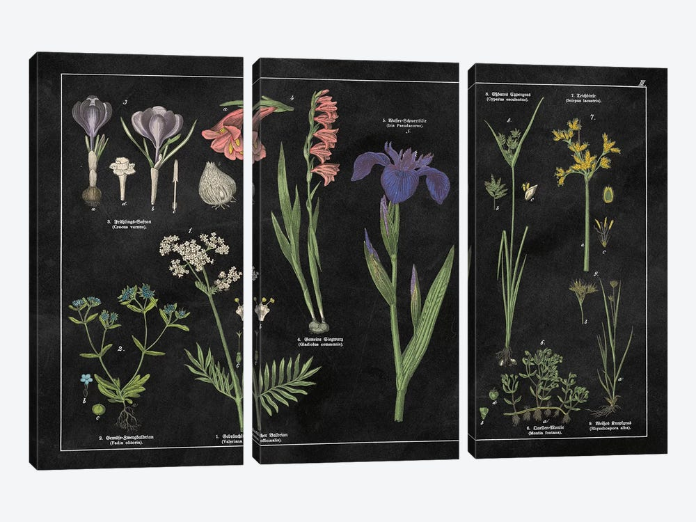 Botanical Floral Chart II by Wild Apple Portfolio 3-piece Canvas Wall Art