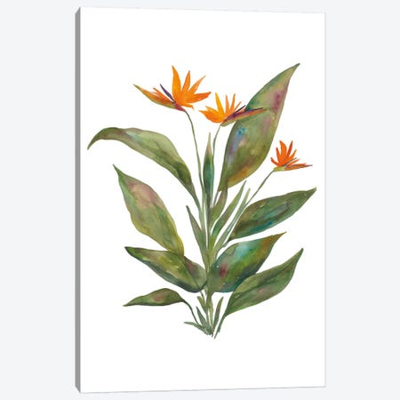 Bright Bromeliad Canvas Print #WAC4932} by Wild Apple Portfolio Canvas Print