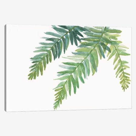 Ferns I Canvas Print #WAC4988} by Chris Paschke Canvas Art