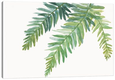 Ferns I Canvas Art Print