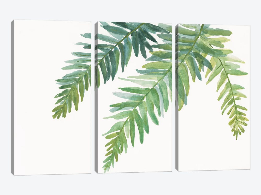 Ferns I by Chris Paschke 3-piece Canvas Wall Art