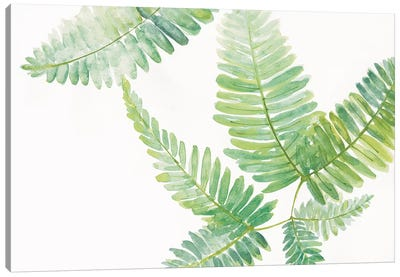 Ferns II Canvas Art Print