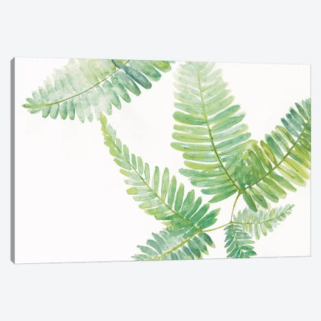 Ferns II Canvas Print #WAC4989} by Chris Paschke Canvas Wall Art